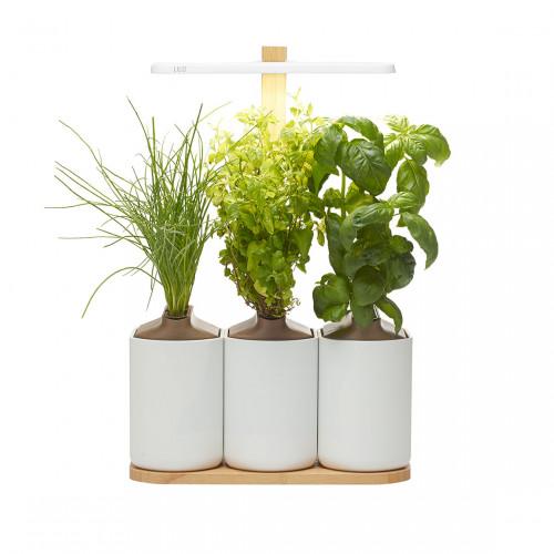 Prêt à Pousser Lilo Connect - Indoor Garden