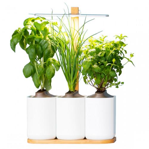 Prêt à Pousser Lilo - Indoor Garden