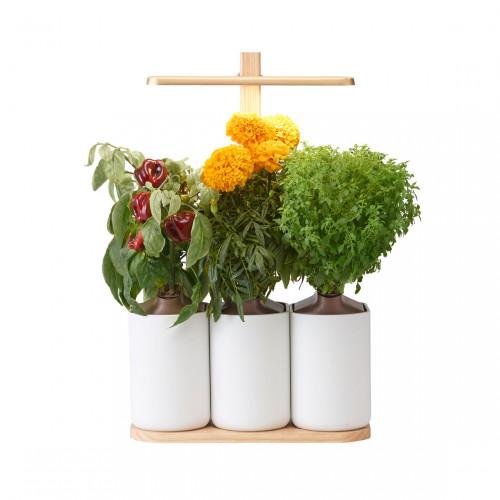 Prêt à Pousser Lilo Edition - Indoor Garden